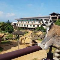 【台湾情報】動物が部屋にやってくるホテル、家族連れならアクティビティの参加がマスト!