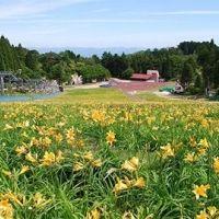 一面にニッコウキスゲが咲き誇るスポットが誕生!5月26日より開園