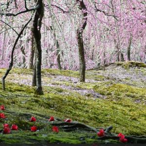 一足早く春を感じに。梅まつりが開かれる関西の庭園4選