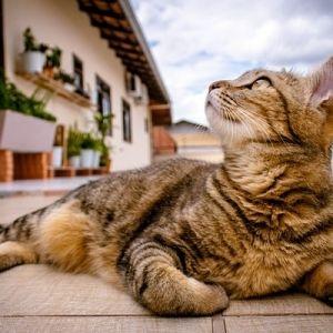 G.W.も猫に癒される。「いつだって猫展」が京都で開催