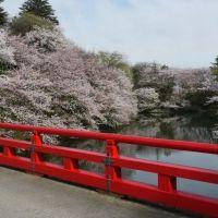 ユネスコ無形文化遺産の伝統祭。絶品地元グルメと歴史に触れる富山旅へ
