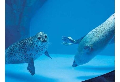 一度は行ってみたいおすすめの水族館①男鹿水族館 GAO