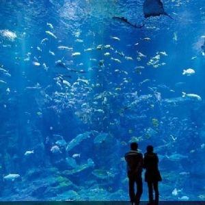 ユニークな展示から世界初まで!行って損しないおすすめの水族館4選その0
