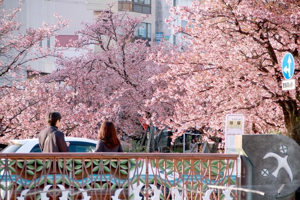 【静岡】冬に早咲き桜を満喫! 熱海でおすすめのゲストハウスと周辺スポットその2