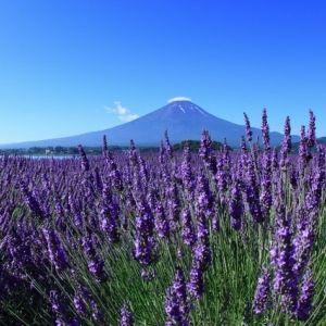 逆さ富士にラベンダー畑!今知っておきたい「河口湖」周辺の観光スポットその0