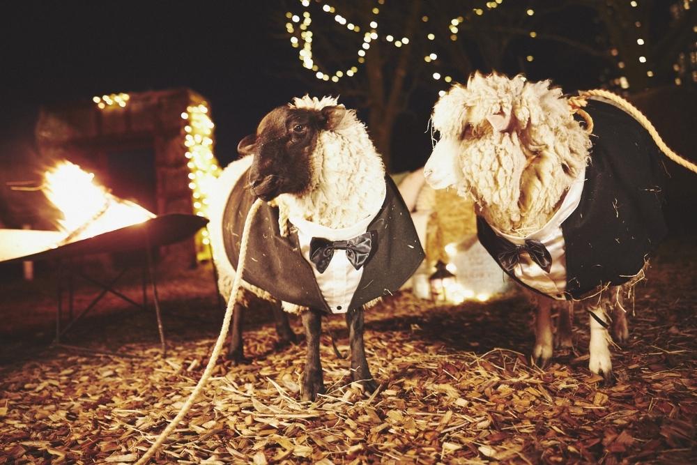仮装した羊やヤギと過ごす星野リゾート トマムの「ファームハロウィンパーティー」