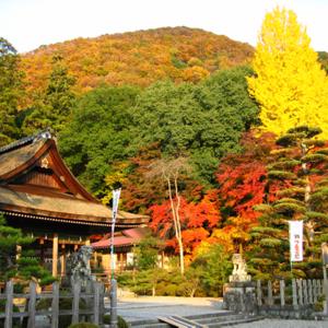 大好きな彼を誘っちゃえ!京都の「出雲大神宮」で紅葉狩りと縁結び♡