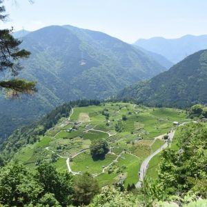 岐阜にマチュピチュが !? 「天空の茶畑」の絶景に出合う旅へ