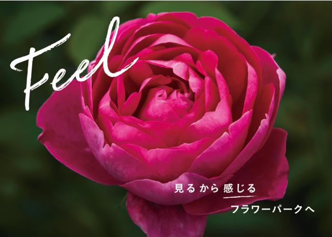 バラの魅力を満喫できるエリアが満載。新品種17種類の世界初披露も