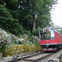 ライトアップされたあじさいを特別列車で!列車が登山する鉄道。鉄旅タレント木村裕子が提案する、箱根登山鉄道の旅【連載第6回】