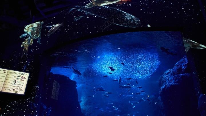 """今年のテーマは「満天の星降る水族館」 """"えのすい""""こと新江ノ島水族館の「ナイトワンダーアクアリウム2017」に行ってきましたその1"""