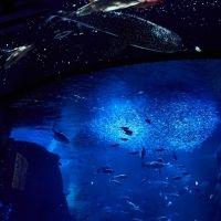 """今年のテーマは「満天の星降る水族館」 """"えのすい""""こと新江ノ島水族館の「ナイトワンダーアクアリウム2017」に行ってきました"""