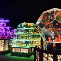 【日本橋】3万匹超の金魚が泳ぐ「アートアクアリウム美術館」が8月28日にオープン!