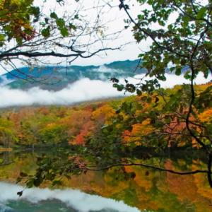 世界自然遺産の一つとして有名!「知床五湖」の知られざる魅力とは?