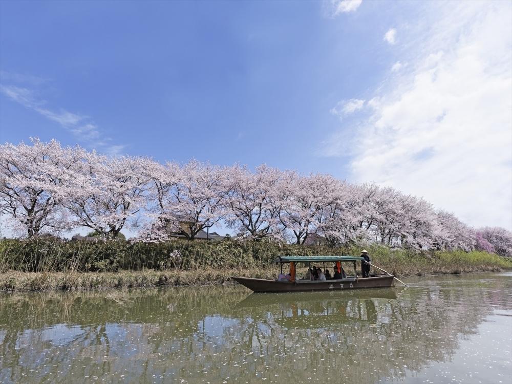 「大聖寺川貸切り流し舟」でお花見ができる「界 加賀」