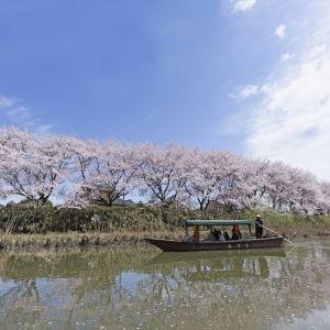 """どのスタイルが好み? 出雲・加賀・鬼怒川で過ごす""""花旅"""""""