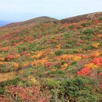 真紅の絶景が目の前に。今秋は神の絨毯と呼ばれる「栗駒山」へ