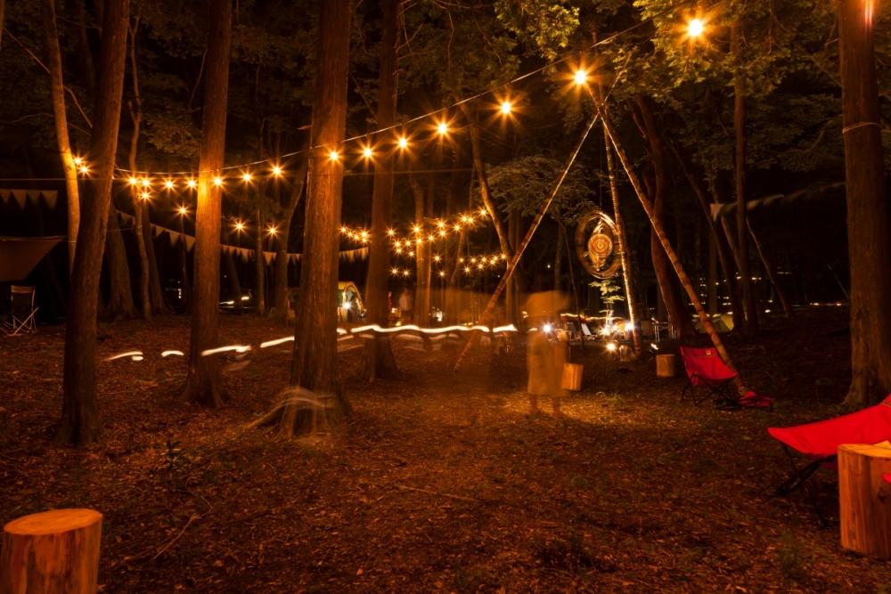 夜の森での野外シネマ