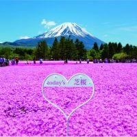 【山梨】「2021富士芝桜まつり」が4月17日(土)より開幕! 今年は場内各所にハートのフォトスポットが新登場