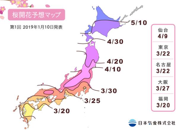 東京で開花宣言!