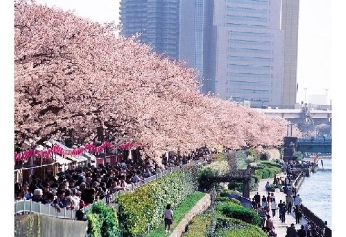 4月7日まで! 墨堤さくらまつり(東京)