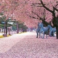 続々と桜が開花! 今からでも間に合う桜が見れる全国のお祭り4選