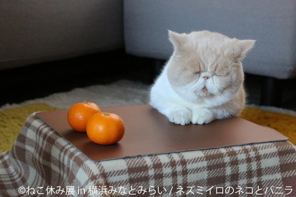 【番外編】ニャンともキュートな作品が勢揃い「ねこ休み展 in 横浜みなとみらい」