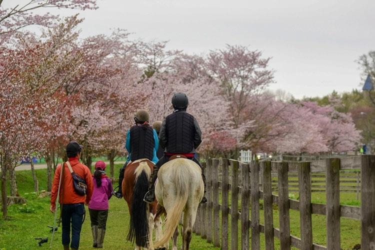 馬と触れ合えるカントリーリゾートで充実のひと時を