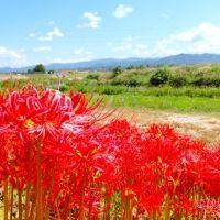 歴史に触れる旅♪義経と弁慶の物語で有名な石川県「梯川」の見どころ