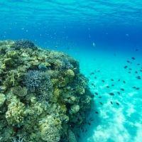 楽しみながら自然に貢献! 沖縄で「サンゴ保護活動」もできるマリンアクティビティはいかが?