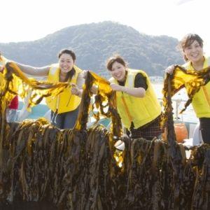 2~3月限定!「鳴門わかめ収穫体験ツアー」で採れたてワカメを召し上がれ!