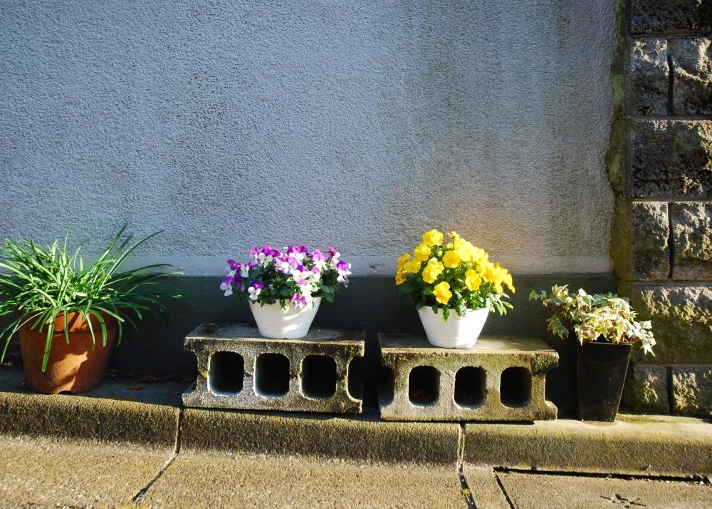 あなたの家の近所でもきっと見つかる!  村田あやこさんに教わる路上園芸の魅力 その2