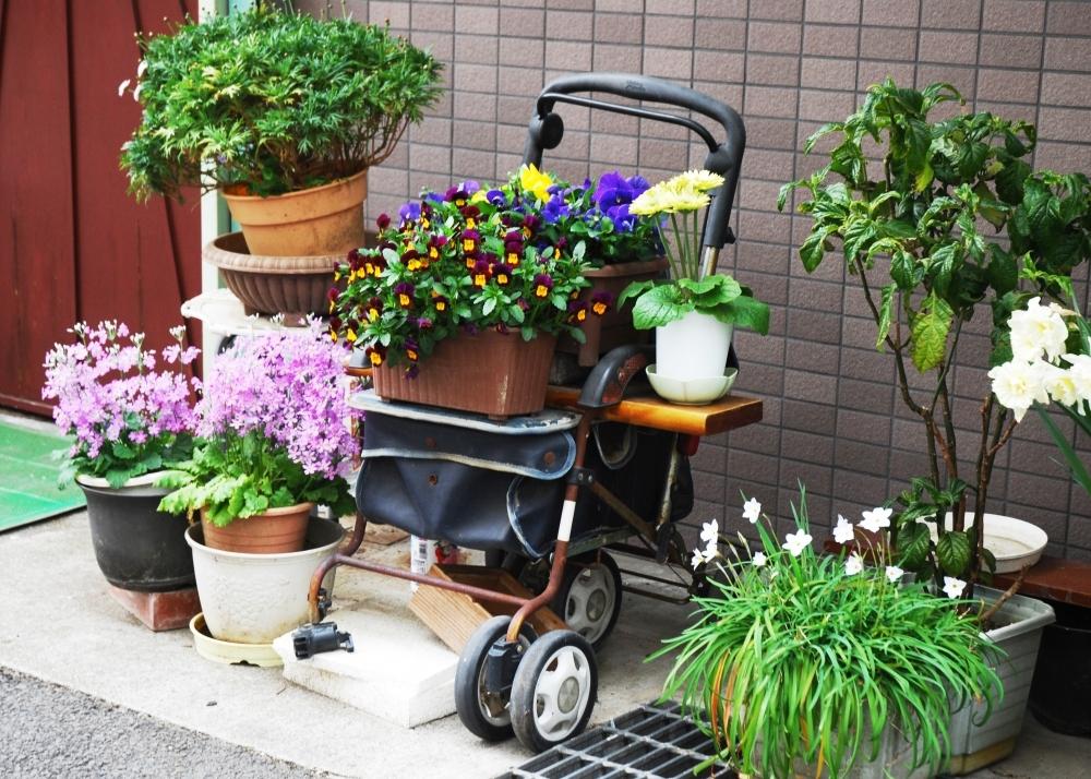 あなたの家の近所でもきっと見つかる!  村田あやこさんに教わる路上園芸の魅力 その3