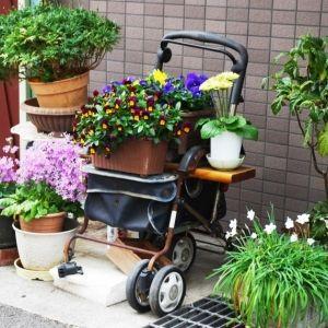 あなたの家の近所でもきっと見つかる!  村田あやこさんに教わる路上園芸の魅力 その0