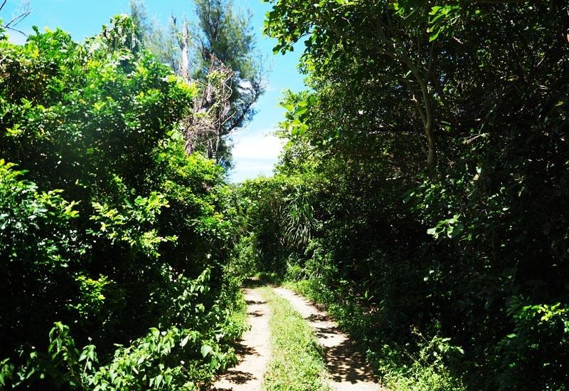 <動画つき>めちゃくちゃ小さい鳩間島でサイクリング。1㎢に満たない島ってどうなの?! 【連載第44回】その4