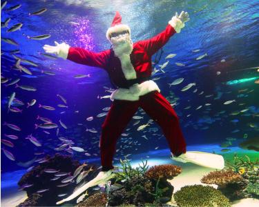 SUNSHINECITY COLORFUL CHRISTMASの見どころ①サンタがダイブする、水中パフォーマンス