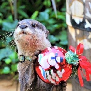 動物たちとクリスマスをお祝い!サンシャイン水族館のイベントとは?