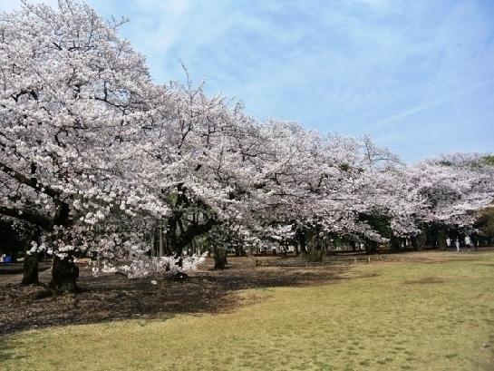 アースデイ東京は代々木で開催