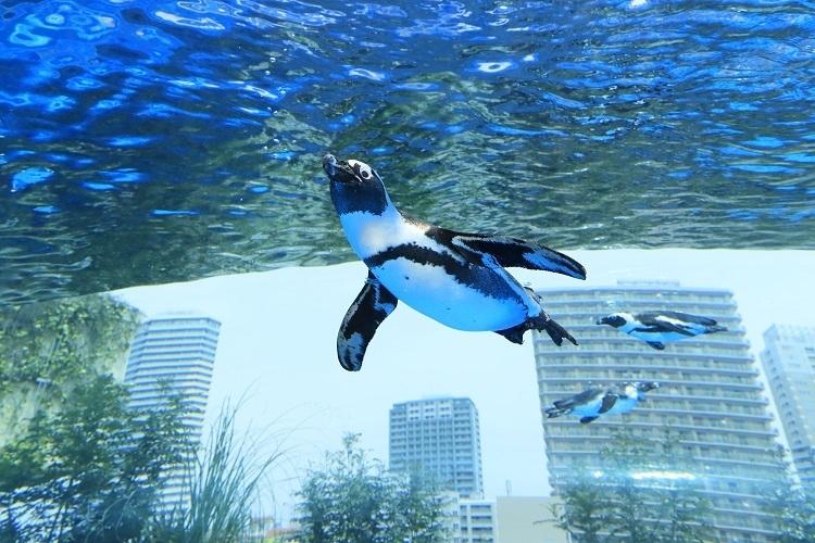 ダイナミックな「天空のペンギン」を世界初展示