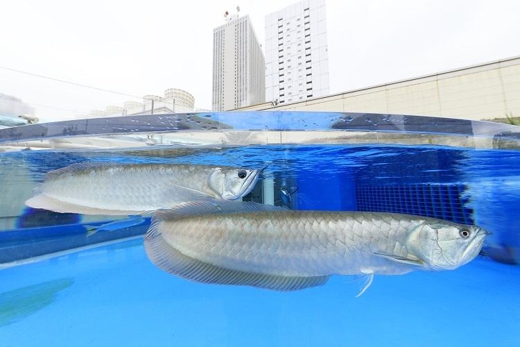 「きらめきの泉」では魚がジャンプ!?