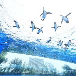 ペンギンが空を飛ぶ!?「サンシャイン水族館」に7月12日より新展示登場!