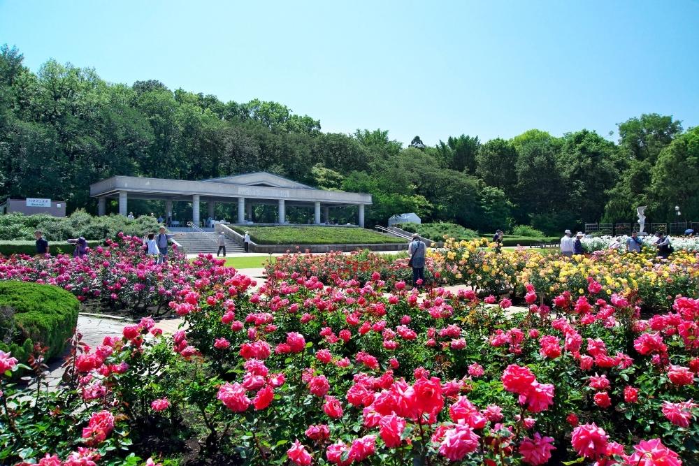 春を探しに都内最大級の植物園「神代植物公園」へ