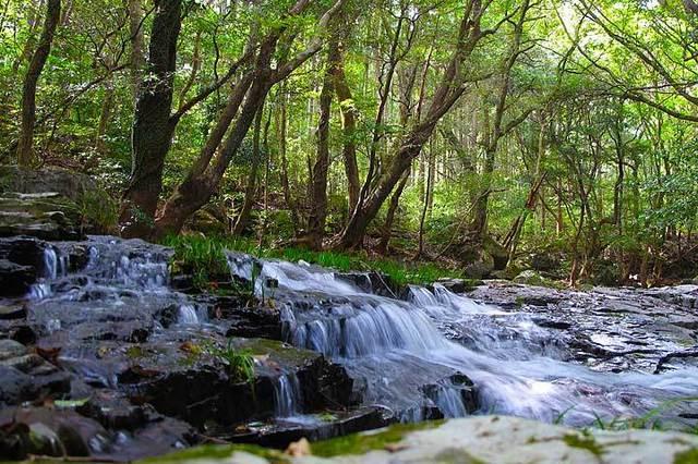 名水百選!長崎県「轟渓流」の魅力と周辺エリアの見どころ②轟渓流の自然