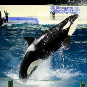シャチのナイトパフォーマンスは必見! 「鴨川シーワールド」で特別なクリスマスを