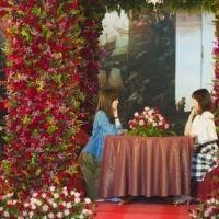 朝から夜まで130万本のバラに包まれる! ハウステンボスで「バラ祭」開催