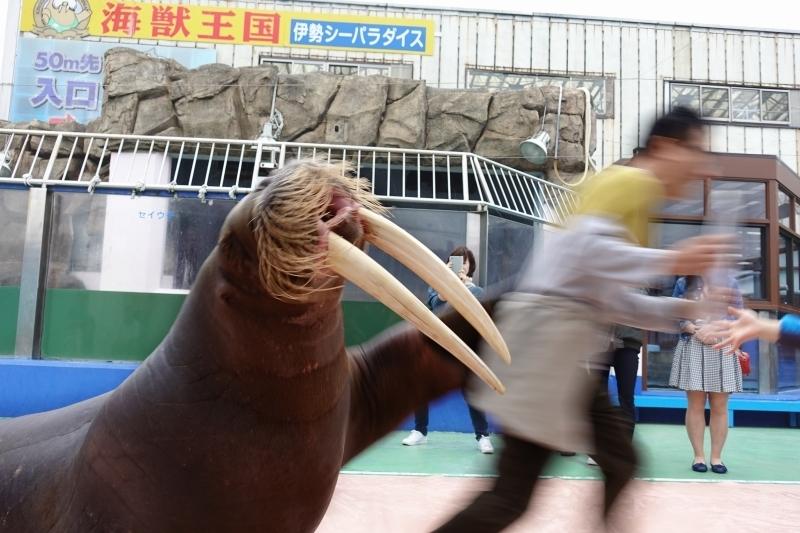 ③泣く子続出の柵無し海獣ショー「伊勢シーパラダイス」(三重県)