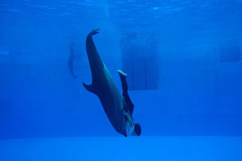 ④イルカショーを水塊で観る水中観覧室「名古屋港水族館」(愛知県)
