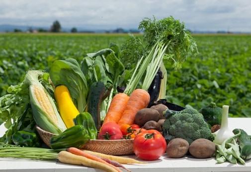 旅色厳選のおすすめお取り寄せ野菜セット①北海道産直 旬の厳選野菜セット