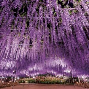 """栃木でフォトジェニックな旅を!この春行くべき""""インスタ映え""""スポット"""