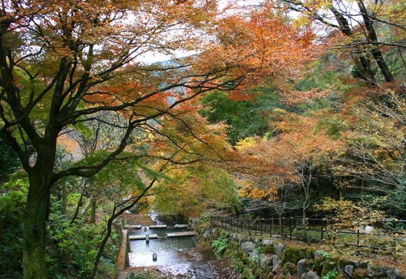 海石榴(神奈川県)